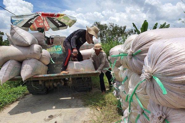 Giá gạo xuất khẩu của Việt Nam giảm sâu, tiệm cận giá bán của Thái Lan, Ấn Độ và Pakistan